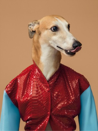 Trussardi Greyhound